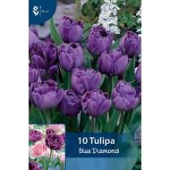 Tulp Blue Diamond