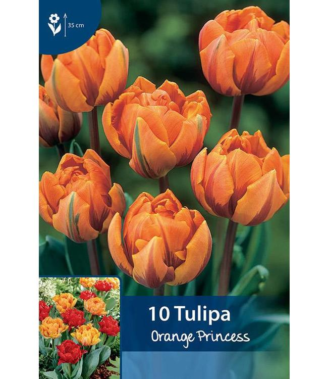Tulpen orange Princess