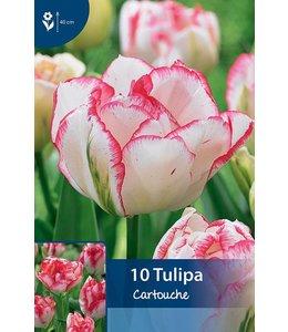Tulpen Cartouche