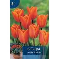 Tulp Annie Schilder