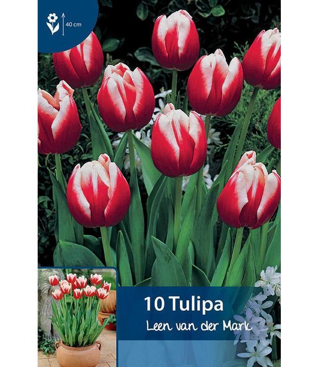 Tulp Leen van der Mark