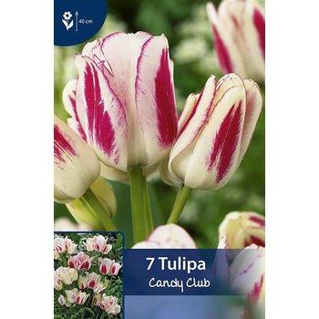 Tulpen Candy Club