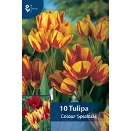 Tulip Colour Spectacle
