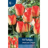 Tulp American Dream