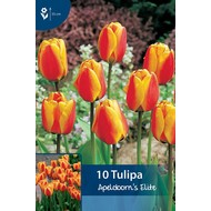 Tulip Apeldoorn's Elite
