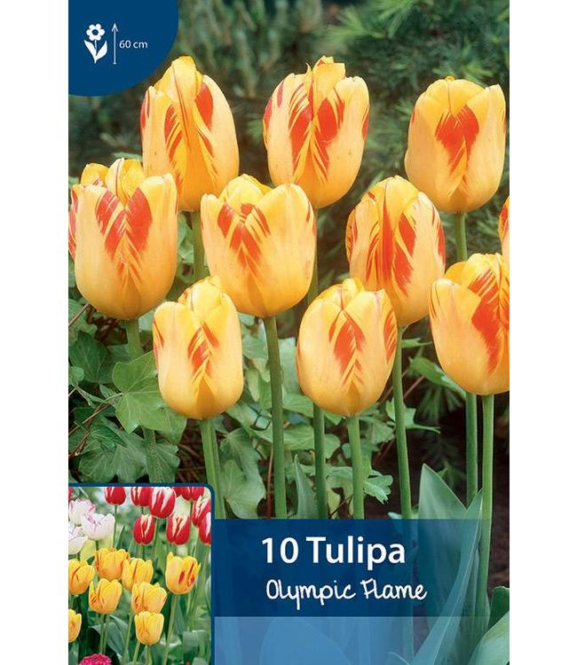 Tulpen Olympic Flame
