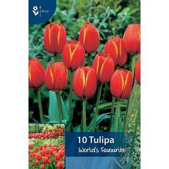 Tulpen World's Favourite