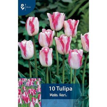 Tulpen Mata Hari