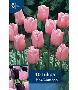Tulp Pink Diamond