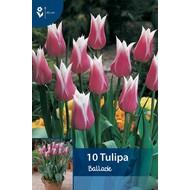 Tulpen Ballade