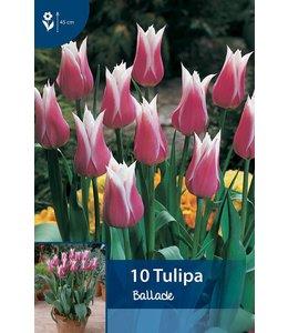 Tulp Ballade