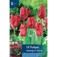Tulip Bastogne's Parrot