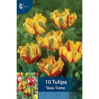 Tulpen Texas Flame