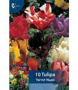 Tulip Parrot Mixed