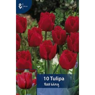 Tulpen Red Wing