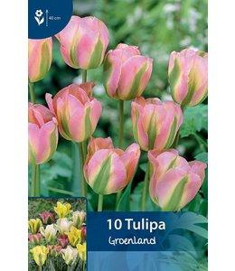Tulip Groenland