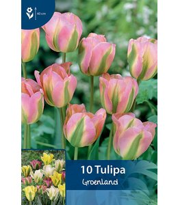 Tulpen groenland