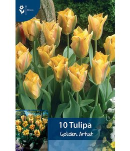 Tulip Golden Artist