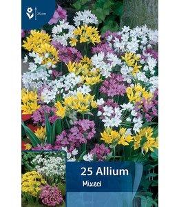 Allium Mischung