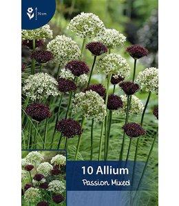 Allium Passion Mixed