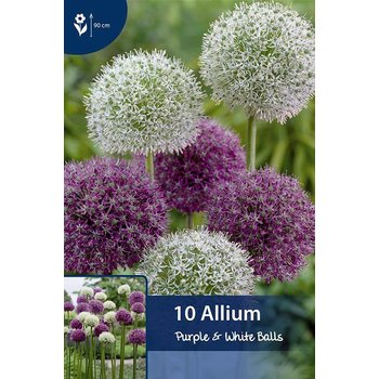 Allium Purple & White Balls