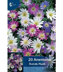 Anemone Blanda Gemengd