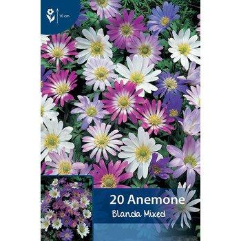 Anemonen Blanda Mischung
