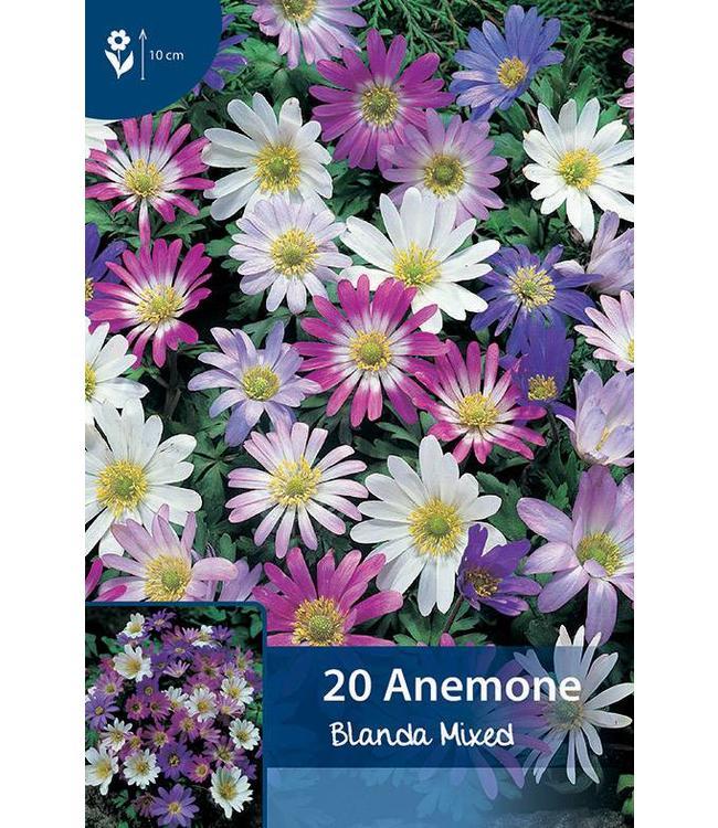 Anemone Blanda Mixed