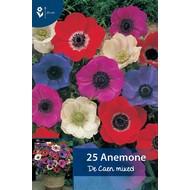 Anemone De Caen gemengd