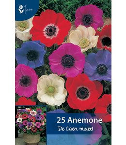 Anemone De Caen mixed