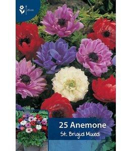 Anemone St. Brigid Gemengd