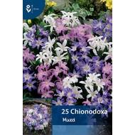 Chionodoxa Mixed