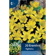 Eranthis Hyemalis