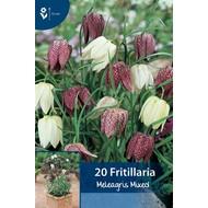 Fritillaria Meleagris Gemengd