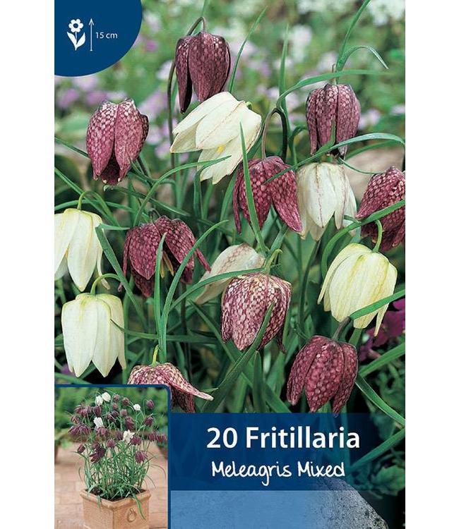 Fritillaria Meleagris Mischung