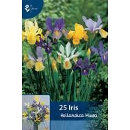 Iris Hollandica Mischung