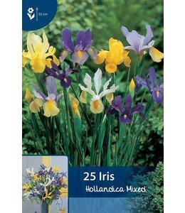Iris Hollandica Mixed