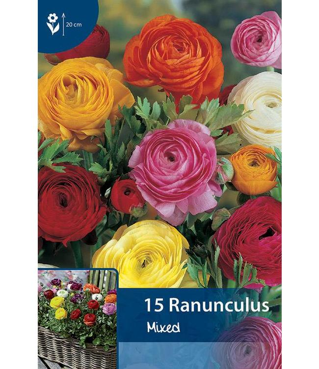 Ranunculus Gemengd