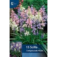 Scilla Campanulata Gemengd