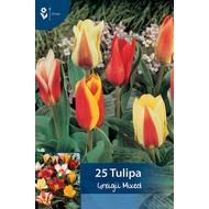Tulpen Greigii Mischung (Pfauentulpen)