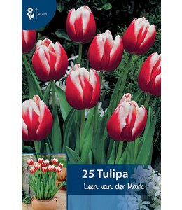 Tulip Leen van der Mark