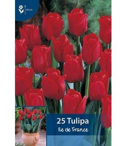 Tulpen Ile de France