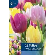 Tulpen Prince Collection