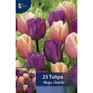 Tulpen Magic Charm