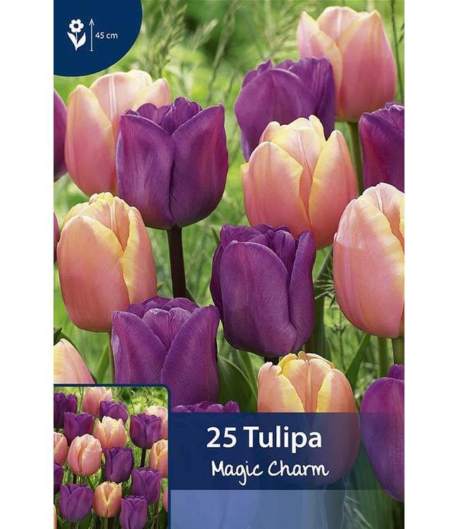 Tulpen Magic Charm