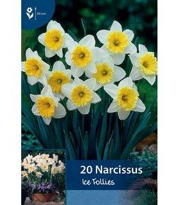 Narcis Ice Follies