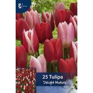 Tulp Delight Mixture