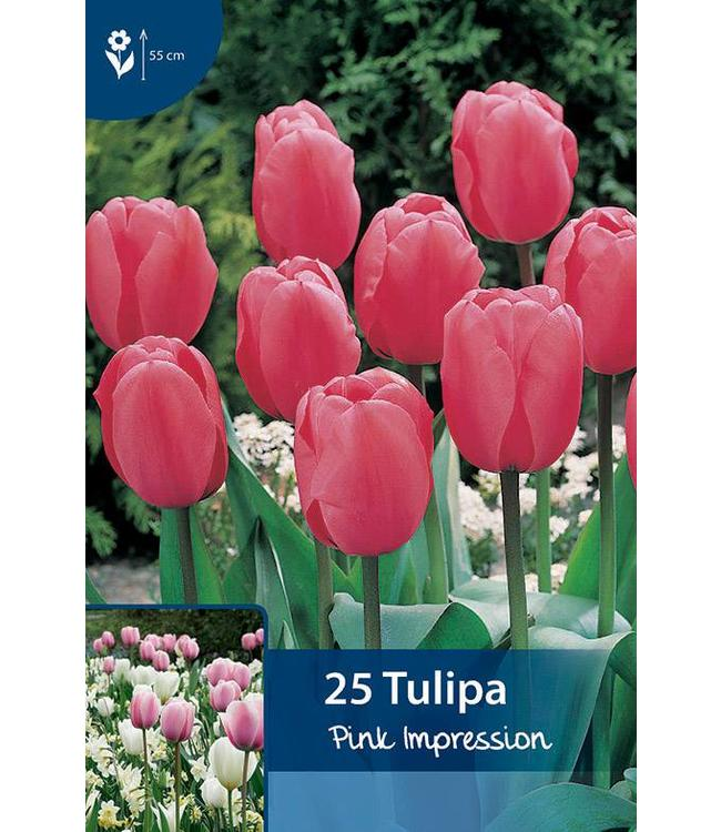 Tulip Pink Impression