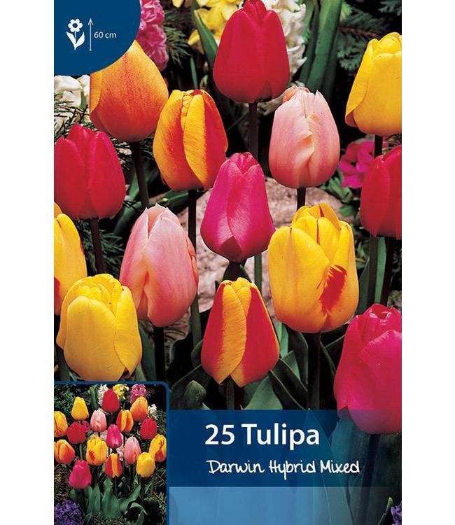 Tulip Darwin Hybrid Mixed