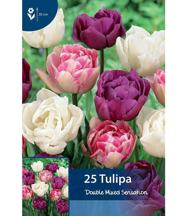 Tulpen Double Mixed Sensation